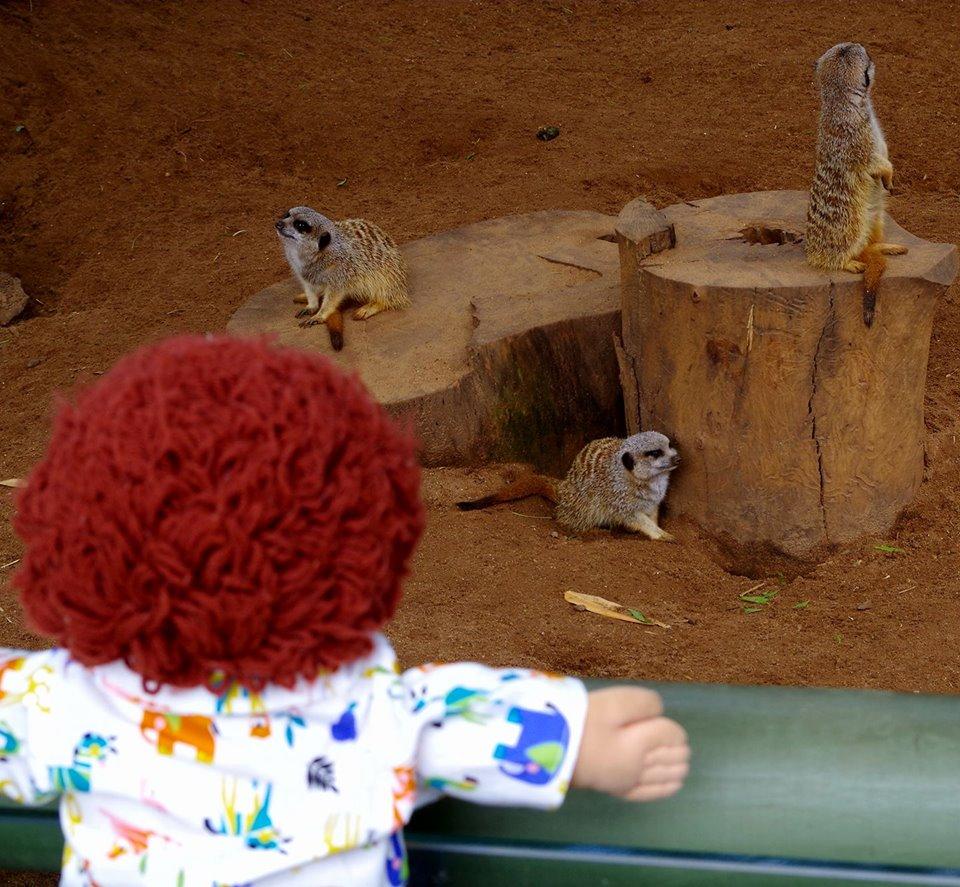 Jo Featherson Howard at the zoo